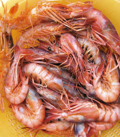 Italian Seafoodsの素材 [FYI00169587]