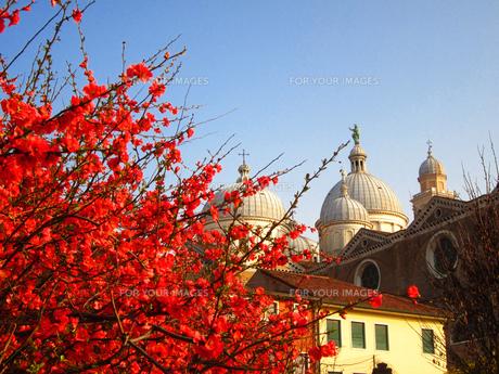 Una Primavera a Santa Giustinaの素材 [FYI00169598]