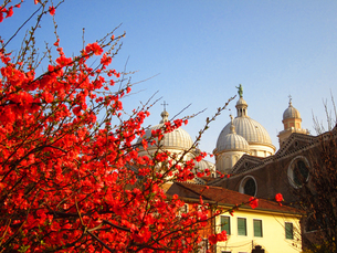 Una Primavera a Santa Giustinaの写真素材 [FYI00169598]