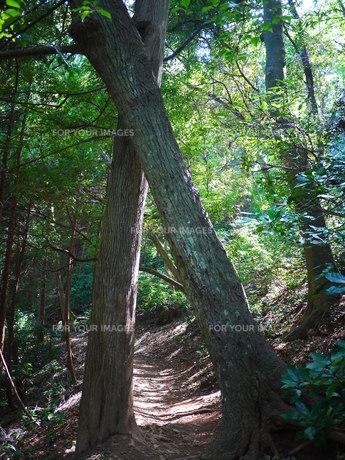 木のゲートの写真素材 [FYI00169653]