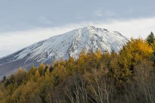 樹海台駐車場から見上げる富士山 の写真素材 [FYI00169728]