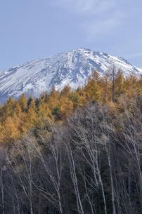 カラマツと富士山頂 の写真素材 [FYI00169731]