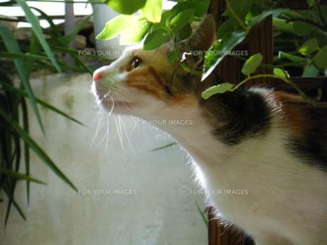 ギリシャ・アテネの野良猫の写真素材 [FYI00169821]