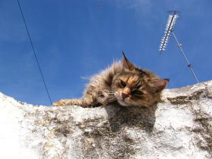 ギリシャの猫の写真素材 [FYI00169822]