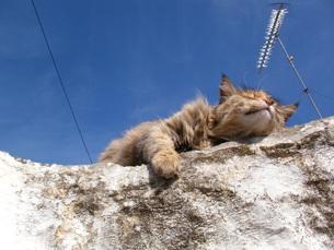 ギリシャの猫の写真素材 [FYI00169832]