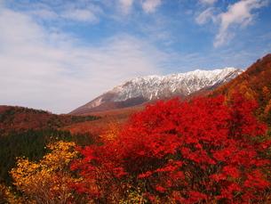 紅葉の鍵掛峠から大山の写真素材 [FYI00169950]