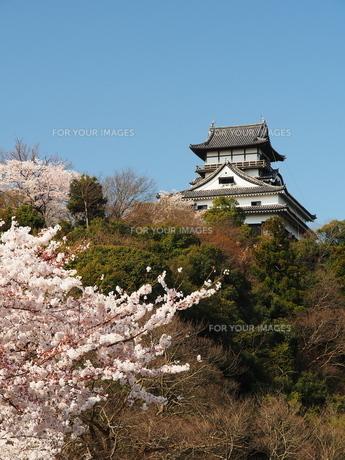 桜咲く犬山城の素材 [FYI00169954]