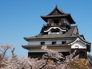 桜咲く犬山城の素材 [FYI00169955]