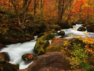 紅葉の奥入瀬渓流の写真素材 [FYI00169957]