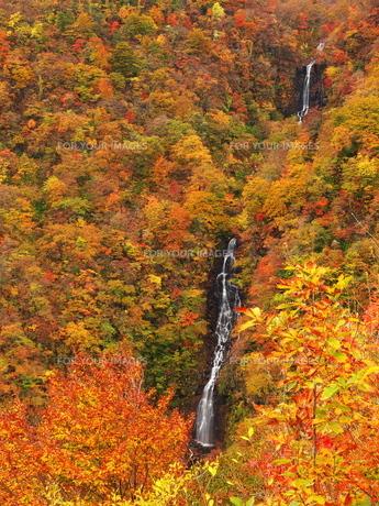 紅葉の三階の滝の写真素材 [FYI00169960]