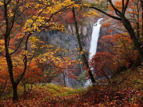 紅葉の華厳の滝の写真素材 [FYI00169961]