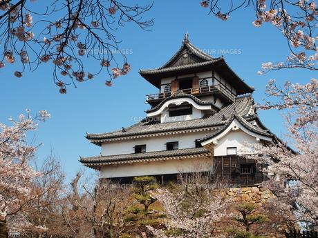 桜咲く犬山城の素材 [FYI00169962]