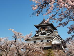 桜咲く犬山城の素材 [FYI00169967]
