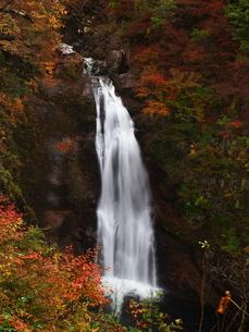紅葉の秋保大滝の写真素材 [FYI00169969]