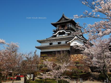 桜咲く犬山城の素材 [FYI00169970]