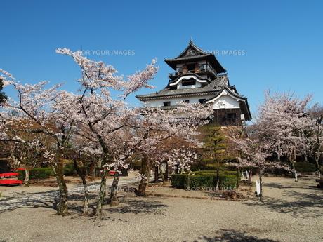 桜咲く犬山城の素材 [FYI00169973]
