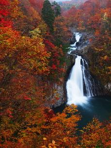 紅葉の法体の滝の写真素材 [FYI00169974]