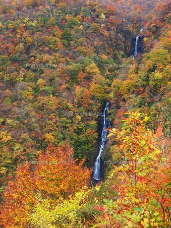 紅葉の三階の滝の写真素材 [FYI00169984]