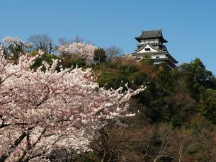 桜咲く犬山城の素材 [FYI00169989]