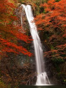 紅葉の箕面の滝の素材 [FYI00169991]