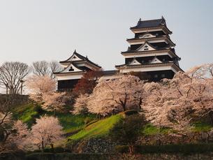 桜咲く大洲城の写真素材 [FYI00169999]