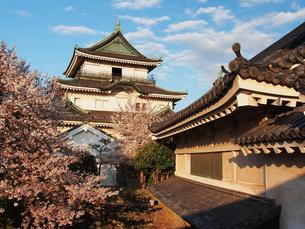 桜咲く和歌山城の写真素材 [FYI00170007]