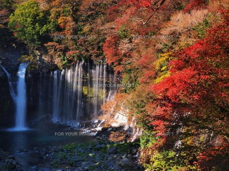 紅葉の白糸の滝の素材 [FYI00170014]