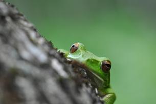カエルの写真素材 [FYI00170130]
