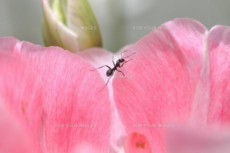 蟻の写真素材 [FYI00170700]