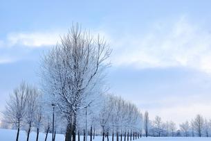 冬の並木道の写真素材 [FYI00171078]