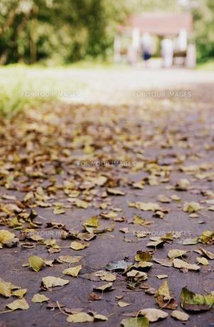 落ち葉道の写真素材 [FYI00171145]