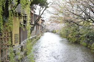 京の春の写真素材 [FYI00171146]