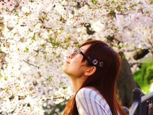 桜の中のメガネ少女の素材 [FYI00171147]