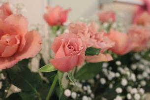 ピンクのバラとかすみ草の写真素材 [FYI00171156]