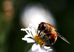 蜜の味の写真素材 [FYI00171199]