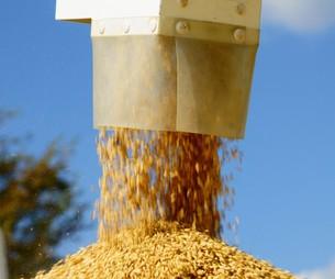 脱穀の写真素材 [FYI00171372]