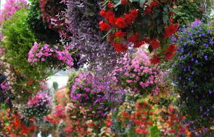 花の乱舞の写真素材 [FYI00171373]