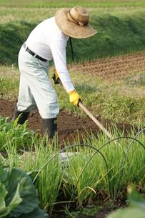 畑仕事の写真素材 [FYI00171449]