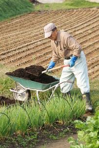 畑仕事の写真素材 [FYI00171452]