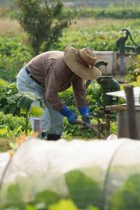 畑仕事の写真素材 [FYI00171461]