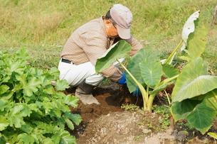 畑仕事をする男性の写真素材 [FYI00171466]