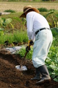 畑仕事をする男性の写真素材 [FYI00171472]