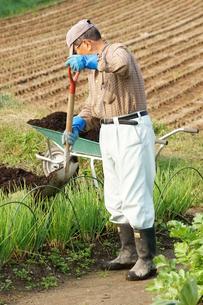 畑仕事をする男性の写真素材 [FYI00171476]