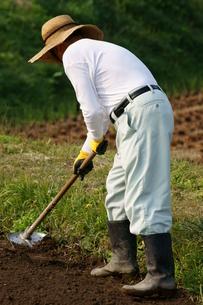 畑仕事をする男性の写真素材 [FYI00171478]