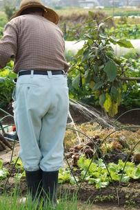畑仕事をする男性の写真素材 [FYI00171481]