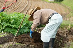 畑仕事をする男性の写真素材 [FYI00171492]