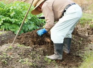 畑仕事をする男性の写真素材 [FYI00171498]