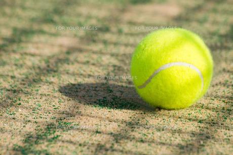 テニスボールの写真素材 [FYI00171544]