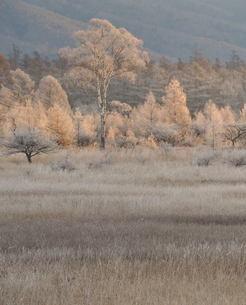 貴婦人の霧氷の写真素材 [FYI00171872]