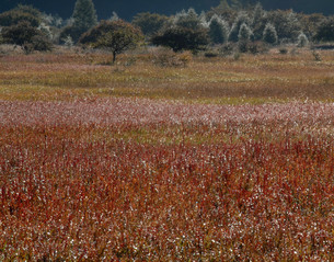 輝く草原の写真素材 [FYI00171887]